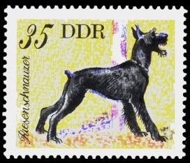 35 Pf Briefmarke: Hunde, Hunderassen, Riesenschnauzer