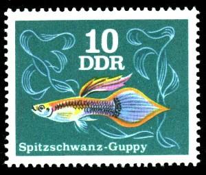 10 Pf Briefmarke: Zierfische, Spitzschwanz-Guppy