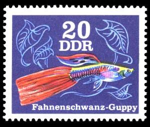 20 Pf Briefmarke: Zierfische, Fahnenschwanz-Guppy