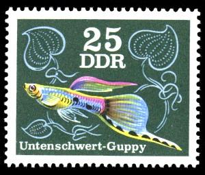 25 Pf Briefmarke: Zierfische, Untenschwert-Guppy