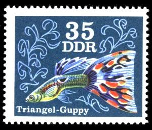 35 Pf Briefmarke: Zierfische, Triangel-Guppy