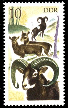 10 Pf Briefmarke: Jagd in der DDR, Mufflon