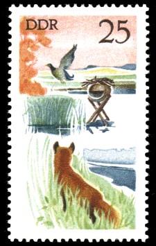 25 Pf Briefmarke: Jagd in der DDR, Rotfuchs u Stockente