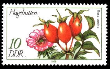 10 Pf Briefmarke: Arzneipflanzen, Hagebutten