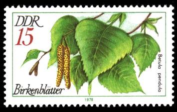 15 Pf Briefmarke: Arzneipflanzen, Birkenblätter