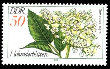 50 Pf Briefmarke: Arzneipflanzen, Holunderblüten