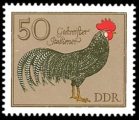 50 Pf Briefmarke: Rassegeflügel, Gestreifter Italiener
