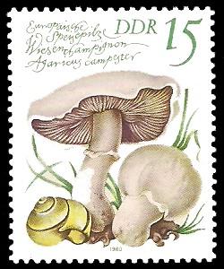 15 Pf Briefmarke: Europäische Speisepilze, Wiesenchampignon