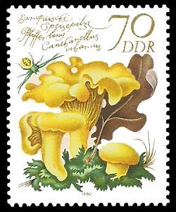70 Pf Briefmarke: Europäische Speisepilze, Pfifferling