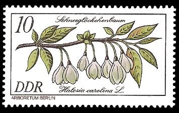 10 Pf Briefmarke: Seltenes Gehölz, Schneeglöckchenbaum