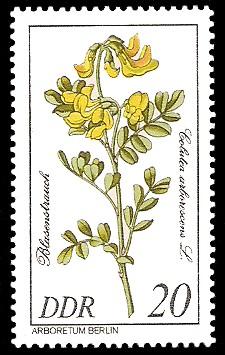 20 Pf Briefmarke: Seltenes Gehölz, Blasenstrauch