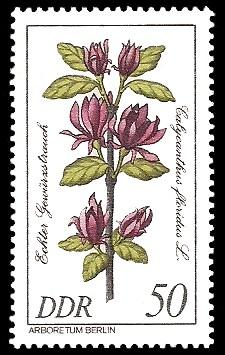 50 Pf Briefmarke: Seltenes Gehölz, Echter Gewürzstrauch