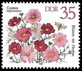 35 Pf Briefmarke: Blüten im Herbst, Cosmos bipinnatus