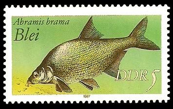 5 Pf Briefmarke: Süßwasserfische, Blei