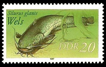 20 Pf Briefmarke: Süßwasserfische, Wels