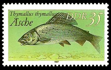 35 Pf Briefmarke: Süßwasserfische, Äsche