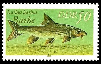 50 Pf Briefmarke: Süßwasserfische, Barbe
