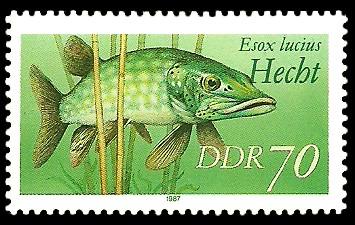 70 Pf Briefmarke: Süßwasserfische, Hecht