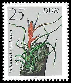 25 Pf Briefmarke: Bromelien, Tillandsia bulbosa