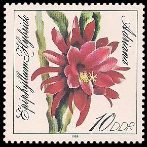 10 Pf Briefmarke: Blattkakteen, Adriana