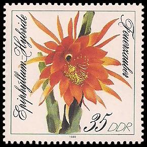 35 Pf Briefmarke: Blattkakteen, Feuerzauber