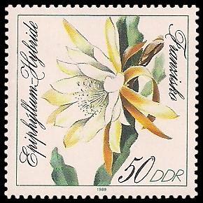 50 Pf Briefmarke: Blattkakteen, Franzisko