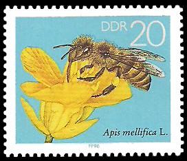 20 Pf Briefmarke: Die Biene, Rapsblüte
