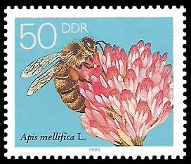 50 Pf Briefmarke: Die Biene, Kleeblüte